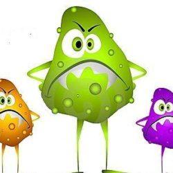 Flora intestinale e Sistema immunitario