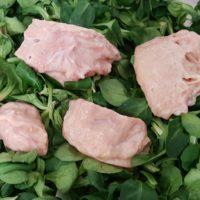 mammella di bovino